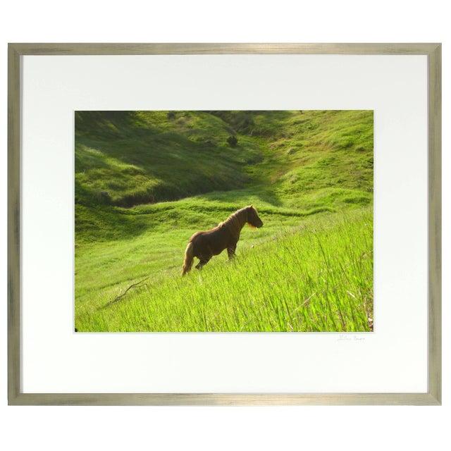 "Contemporary Gaétan Caron ""Stallion in Green Meadow"" Mendocino, Ca 2010 For Sale - Image 3 of 5"