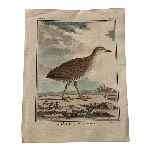 18th Century French Bird Engraving Signed by Jacques De Sève Featuring a Rale De Terre For Sale