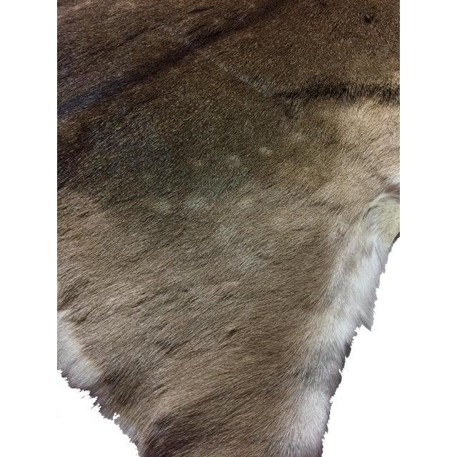 Vintage White Tail Deer Hide Rug Or Wall Hanging- 3′ × 3′9