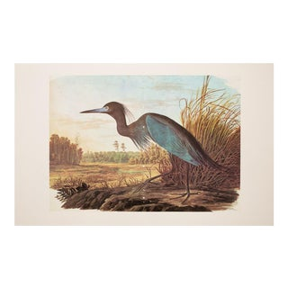 "1960s Vintage ""Blue Heron"" Lithograph by John James Audubon For Sale"