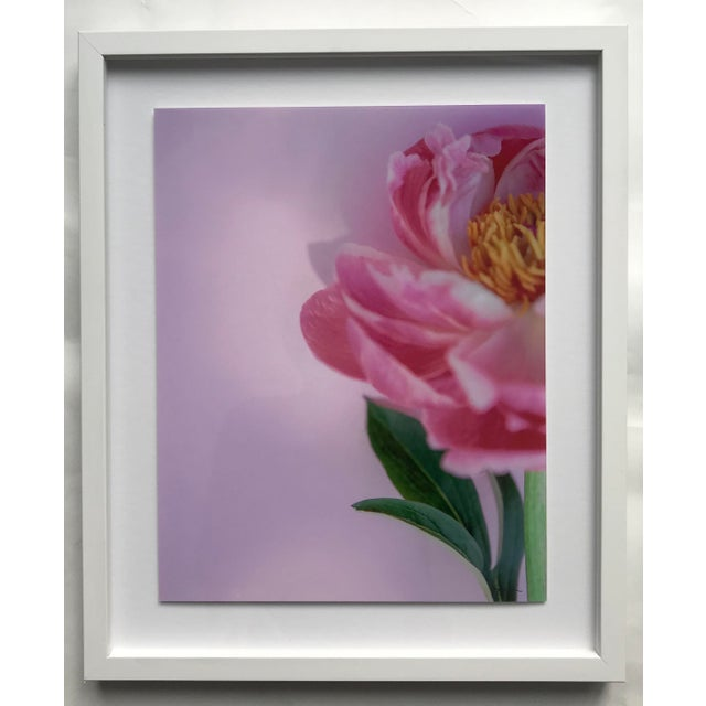 """""""Preppy Peony"""" Contemporary Botanical Photograph by Susan Johnson, Framed For Sale - Image 4 of 4"""