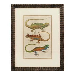 Albertus Seba 18th Century Hand-Colored Print of Three Lizards For Sale