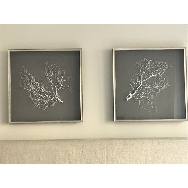 Pair of WJC Designs Coral Sea Fans on Grey Linen in Brushed Silver Frame These are high quality pieces that look great...