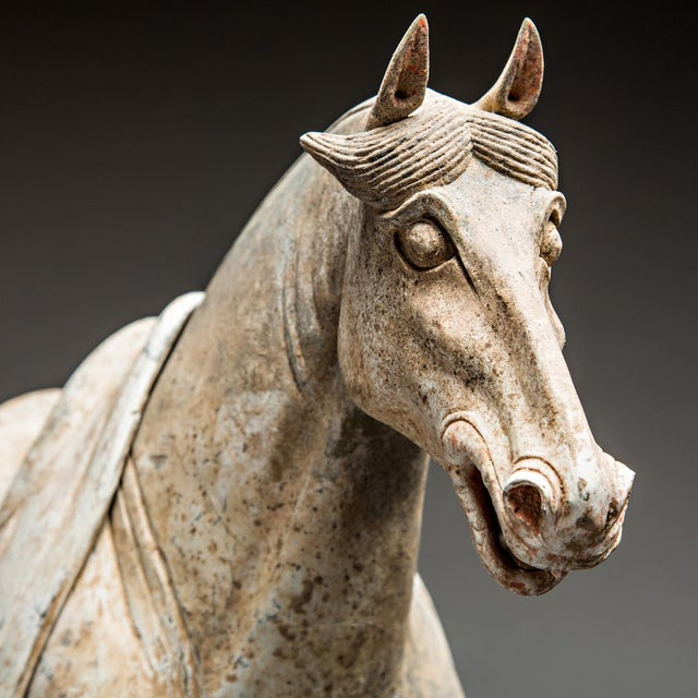 Pair of Tang Horses For Sale - Image 4 of 6