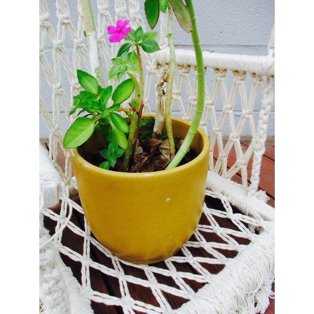 Bohemian Macrame Plant Swing - Image 6 of 11
