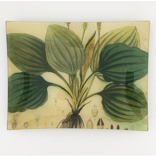 John Derian Decoupage Plate With Hosta Plant Preview