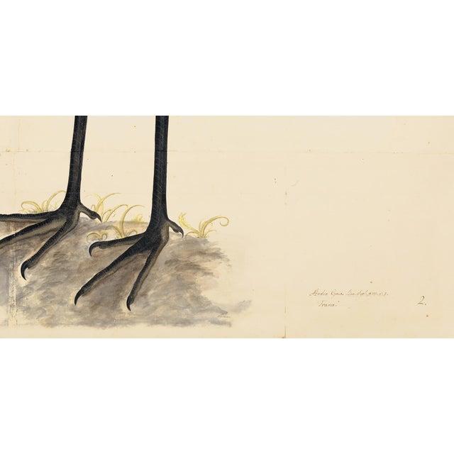 John James Audubon Blue Birds Prints With Roma Moulding - a Pair For Sale - Image 4 of 12