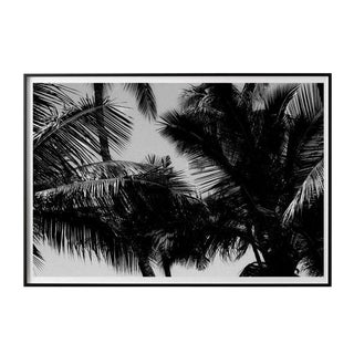 """Palm Frames #1"" Unframed Photographic Print For Sale"