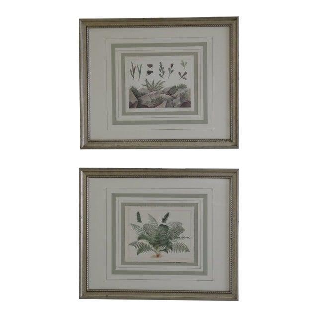 Vincent Brooks Day & Sons Decorative Lithograph Fern Prints - a Pair For Sale