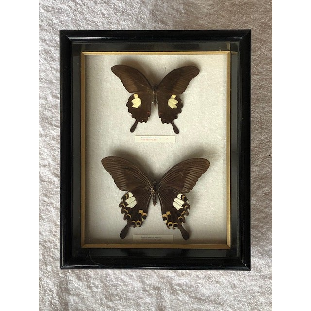 Vintage Mounted Butterflies for Wall Mounting For Sale In Los Angeles - Image 6 of 6