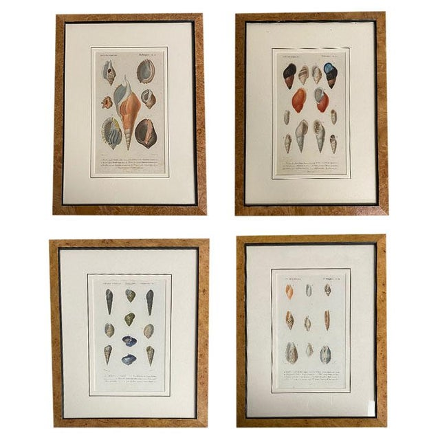 Antique French Mollusk Sea Shell Engravings - Set of Four For Sale - Image 13 of 13