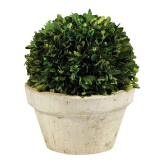 Kenneth Ludwig Chicago Boxwood Ball in Pot For Sale