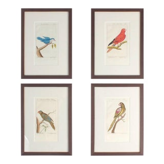 Charming Antique Hand-Colored Bird Engravings - Set of 4 For Sale