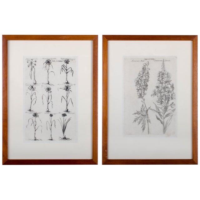 1719 De Bry Botanical Engravings - a Pair For Sale