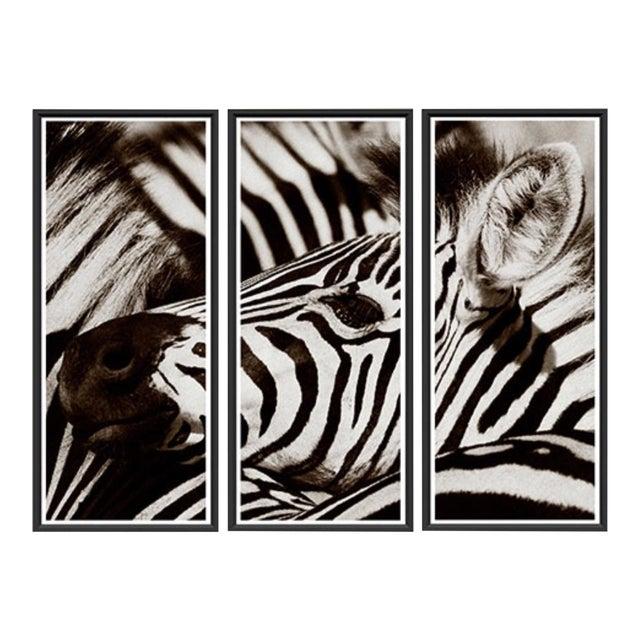 """Trowbridge """"Zebra"""" Photo Triptych by Jamie Thorn Set of 3 For Sale"""
