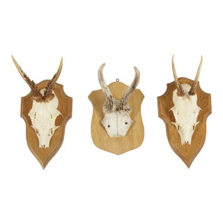 Vintage German Roe Deer Antlers - Set of 3 For Sale