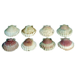 Natural Pink-Hued Shell Serving Dishes - Set of 8 For Sale