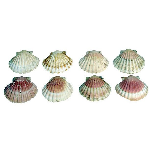 Natural Pink-Hued Shell Serving Dishes - Set of 8 - Image 1 of 3