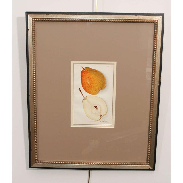 An architectural digest print of fruit, circa 1897-1914.