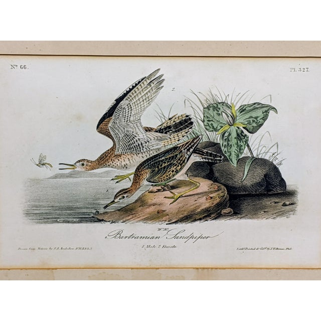 This is a lithograph hand-colored and printed by JT Bowen of JJ Audubon's Bartramian Sandpiper. A bit of discoloring...