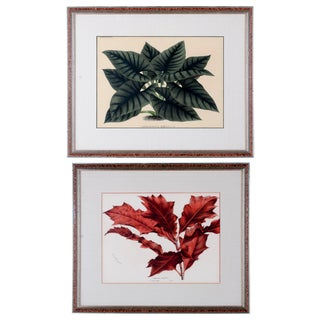Botanical Lithographs from Linden's L'Illustration Horticole - A Pair For Sale