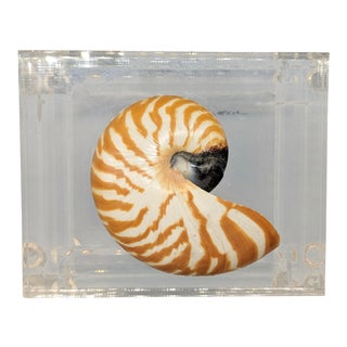 20th Century Nautical Nautilus Shell on Lucite Trinket Box For Sale