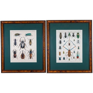 Early 20th Century Hand Painted Insect Species Lithographs, Framed - a Pair For Sale