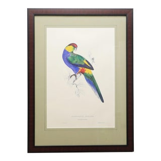 Framed Vintage Reproduction of Edward Lear's Red-Capped Parakeet For Sale