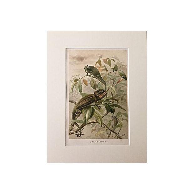 Antique 1900 Chameleons Chromolithograph - Image 2 of 4