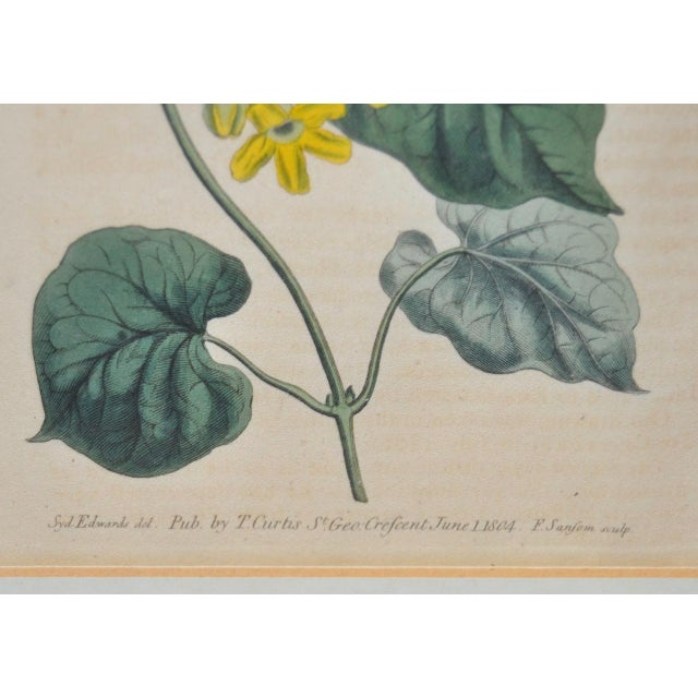 Curtis Botanical Hand Colored Engraving c.1804 For Sale - Image 4 of 6