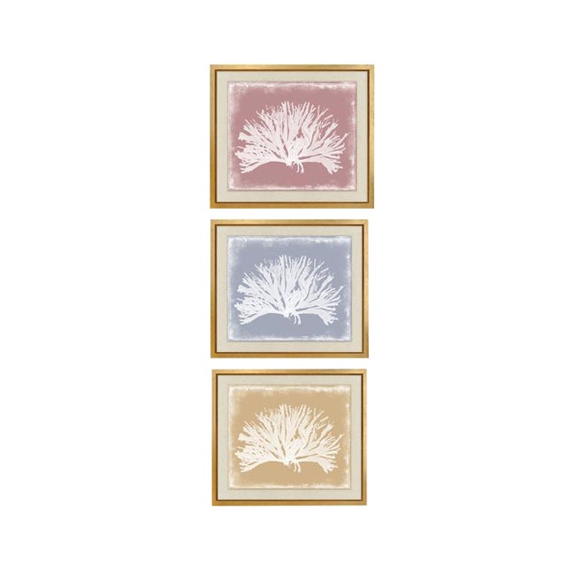 "Trowbridge ""Coloured Corals"" Prints Set of Three For Sale"