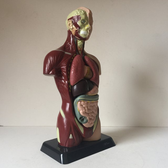 Contemporary Small Medical Model Sculpture For Sale - Image 3 of 7