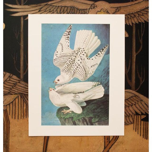 "Royal Blue 1966 Cottage ""Gyrfalcon"" Vintage Print by Audubon For Sale - Image 8 of 11"