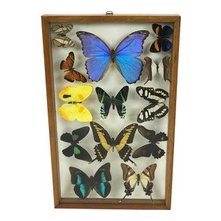 Vintage Mounted Thirteen Butterflies in Wood Frame For Sale