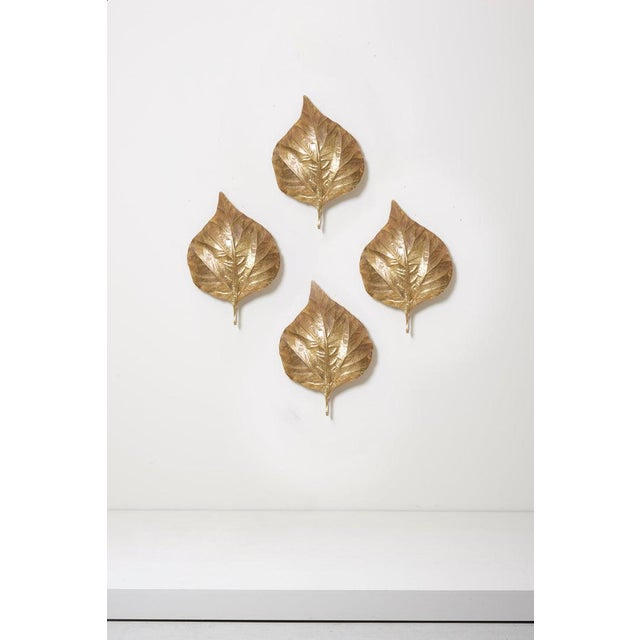Gold 1 of 4 Huge Rhaburb Leaf Brass Wall Lights or Sconces by Tommaso Barbi For Sale - Image 8 of 13