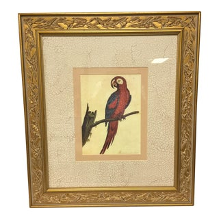 Vintage Framed Jamaican Macaw Lithograph Print For Sale
