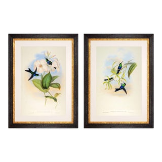 1990s John Gould Framed Prints, Hummingbird (Plates 102 & 104) - a Pair For Sale