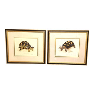 Chic Set of Framed Tortoise Prints - a Pair For Sale