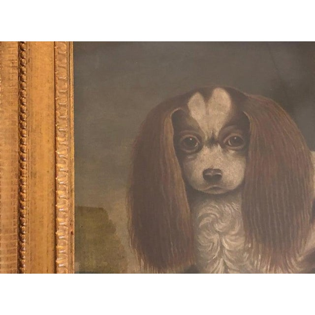 Brown Late 20th Century Portrait of a Cavalier King Charles Spaniel Oil on Canvas Painting For Sale - Image 8 of 11