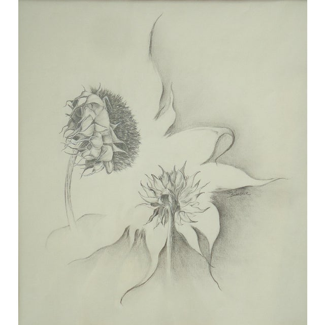 Illustration Julie Schaefer Sunflower Study Drawing For Sale - Image 3 of 5