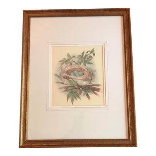 Framed Robin's Nest Vintage Print