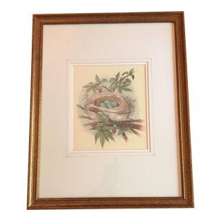 Robin Nest & Eggs Vintage Framed Print For Sale