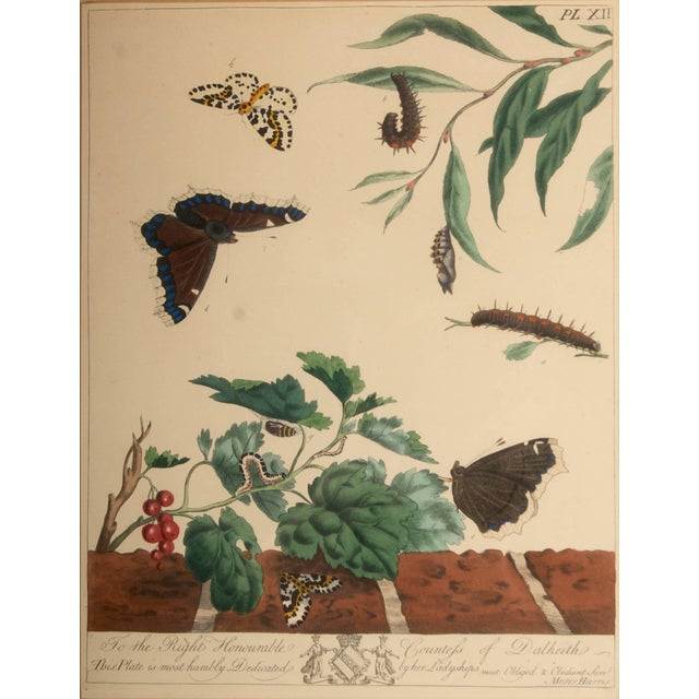 Camberwell beauty, large Magpie Moth from The Aurelian or Natural history of English Moths and Butterflies, Plate XII by...