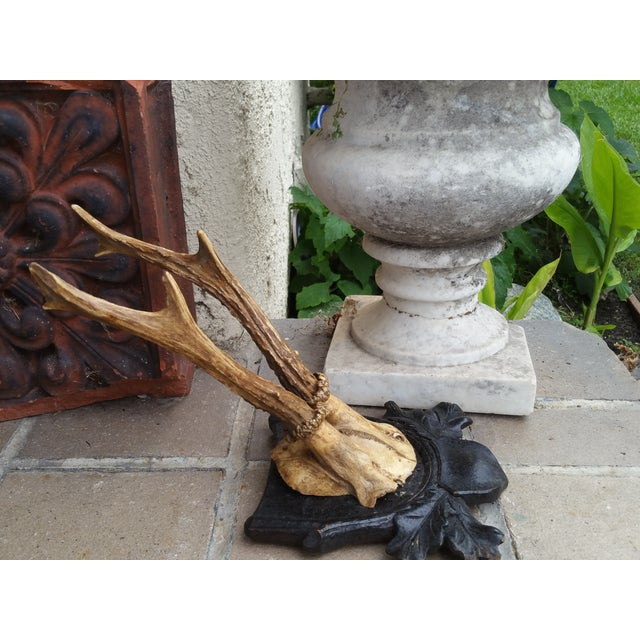 Black Forest Deer Antler Trophy - Image 3 of 4