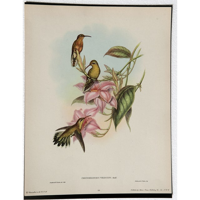 Hummingbird Lithograph by John Gould - Image 2 of 7
