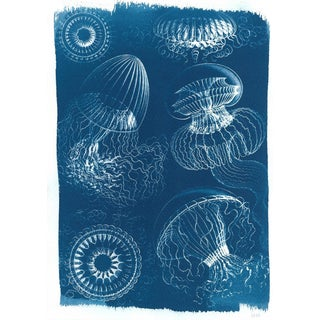 Handmade Jellyfish Cyanotype Print Botanical Drawing, Ernst Haeckel, Jellyfish Art, Nautical Art, Animal Print, Design Decor, 2019 Trend For Sale