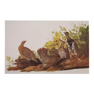 1960s Cottage Style Lithograph of Spotted Grouse by John James Audubon