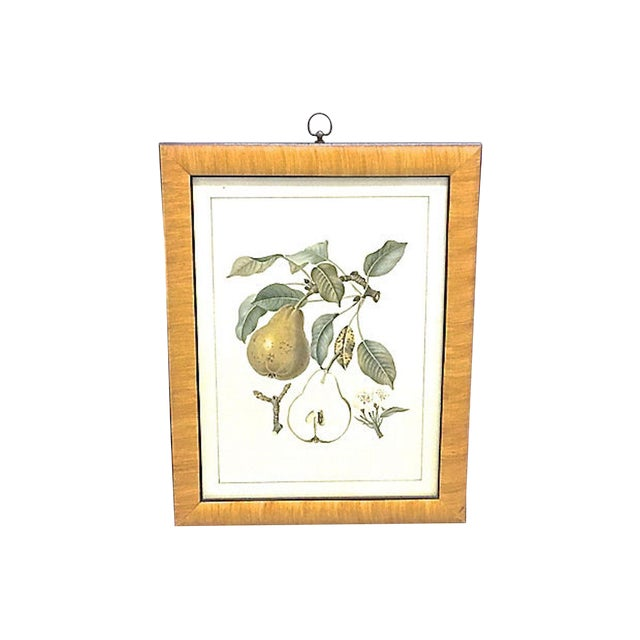 Late 20th Century Pear & Branch Engraving Print For Sale