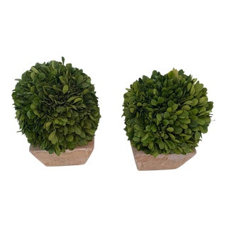 Ballard Designs Preserved Boxwood Topiary Small Dome Arrangements - a Pair For Sale
