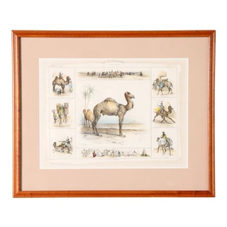 Antique 19th Century French Camel Framed Lithograph Print For Sale